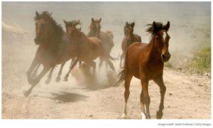 Wild west funding