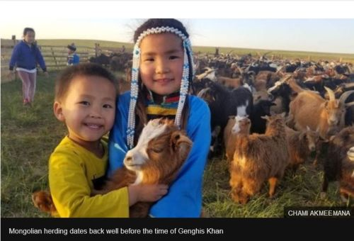 blockchain traceability in Mongolia - Cashmere and climate change threaten nomadic life