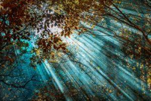 light and forest trees 300x200 - light and forest trees