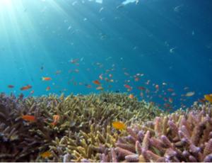 ocean 300x230 - 2019 Canadian Fintech & Funding Directory